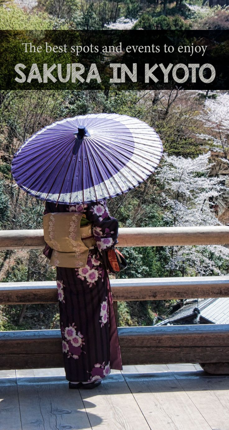 Your guide to finding the top spots and best events to experience sakura (cherry blossom season) in Kyoto