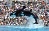 San Diego Theme Park SeaWorld
