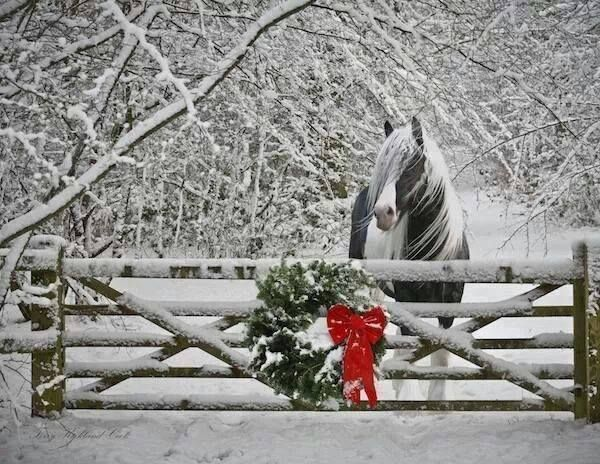 Stunning pic. Please be sure to provide shelter for your horses, livestock, etc. The weather outside is frightful .....