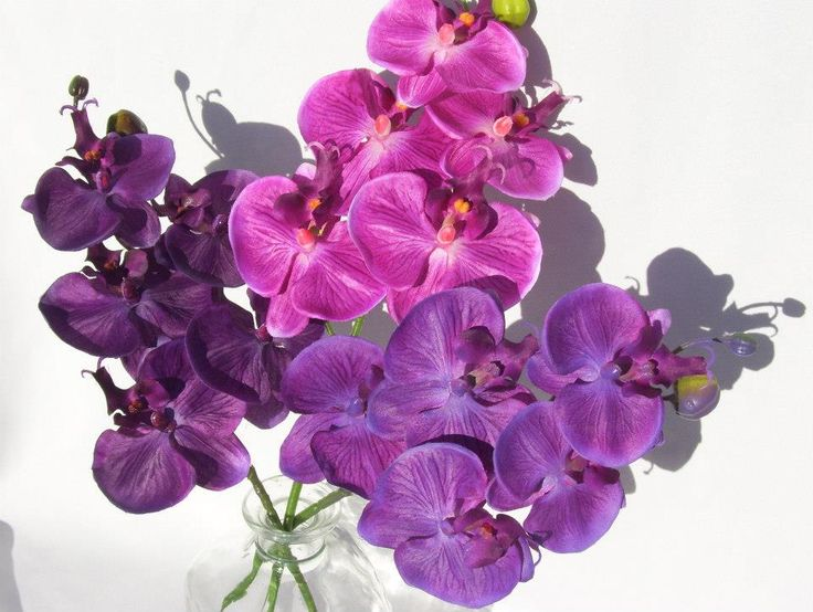 from left to rightpurple plum fuchsia and purple violet 5 bloom phalenopsis 800 silk - Silk Orchids