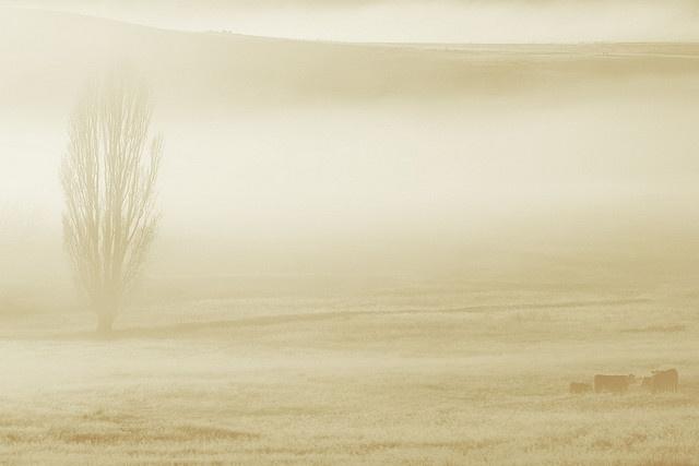 Midwinter dawn breaks near Cooma, NSW Australia
