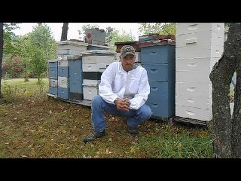 Are you ready become a beekeeper? Well this is the place for you. From the basics to advanced tutorials on keeping honey bees.