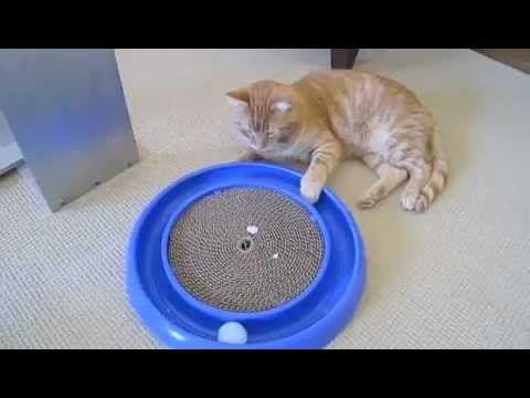Juguete casero para gatos tipo circuito con rascador (Homemade cat toy, lap style with scratcher)#1 - YouTube
