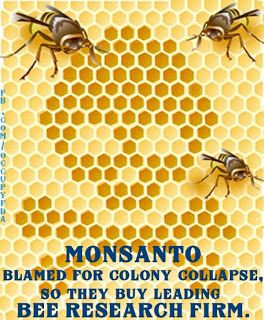Anti GMO Foods and Fluoridated Water: Monsanto buys leading bee research firm after being implicated in bee colony collapse