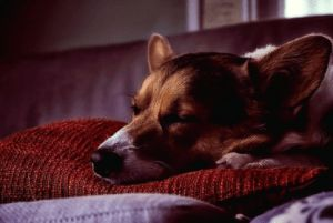 Best Tips When Buying a Dog Bed