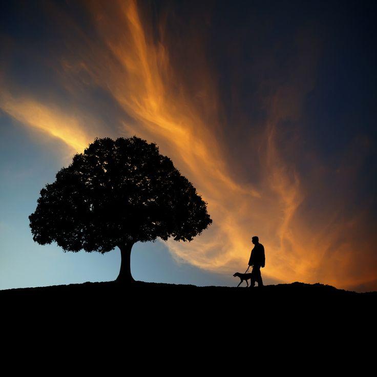 Beautiful Sunset Silhouette Photo