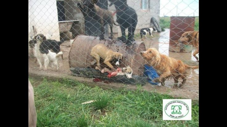 Argentina We the need to create an animal protection agency in each municipality of the whole Argentina and enforce the National Animal Protection Act Law 14,346