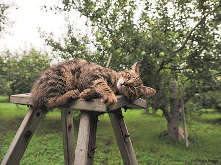 岩合光昭が青森の子猫たちの四季捉えた写真展『ふるさとのねこ』