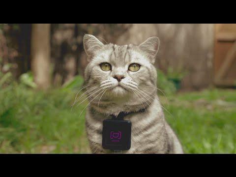 Une vie de chat - POP INSIGHT - l'ADN