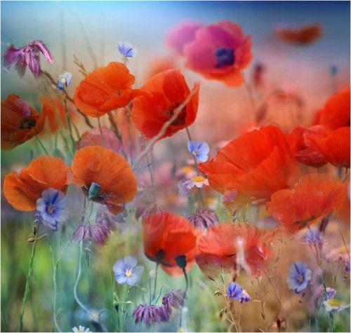 I love poppies - they make me feel so happy...