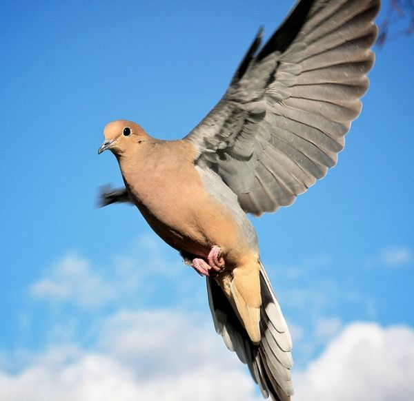 Dove | 20 Beautiful Pictures of Doves - SloDive