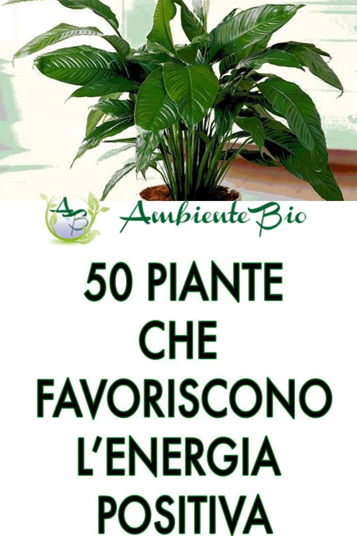Elenco Piante Verdi Da Appartamento.50 Piante Che Favoriscono L Energia Positiva Piante Da