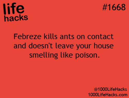 Febreeze kills ants without the poison! Score!