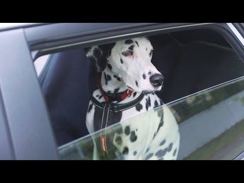 Travelling with your dog - YouTube