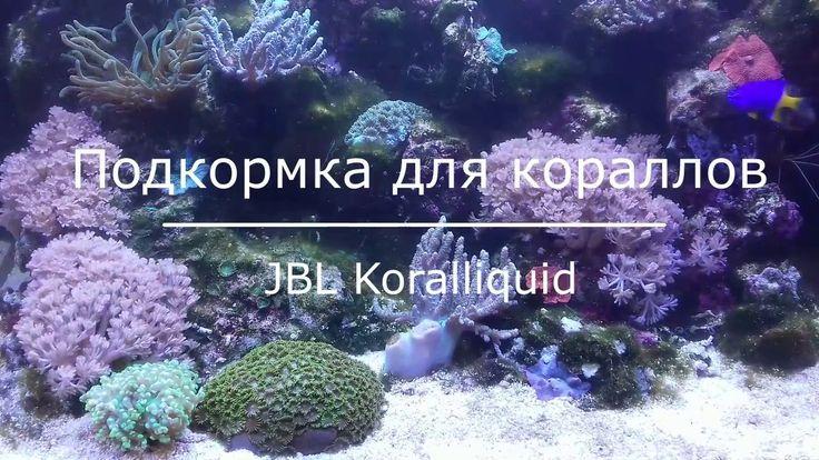 Подкормка жидким планктоном