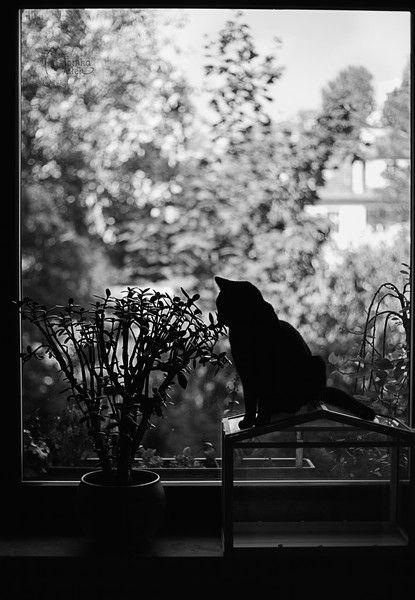 Czarno białe zdjęcie kota - na płótnie. w Fotografia Monika Małek na DaWanda.com