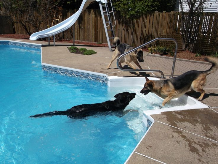 17 best images about german shepherd playing with toys on pinterest bret michaels german. Black Bedroom Furniture Sets. Home Design Ideas