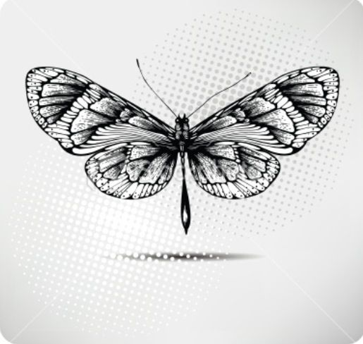 Unique Butterfly Pictures To Draw Or Copy 74