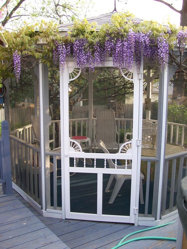 Wisteria On The Back Deck Gazebo (Garden Of Len U0026 Barb Rosen) Pretty.