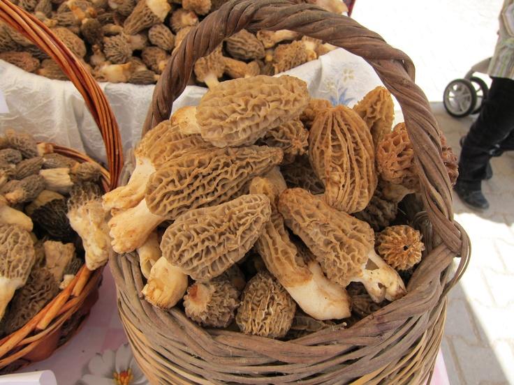 A successful Morel mushroom hunt in Fethiye, Turkey