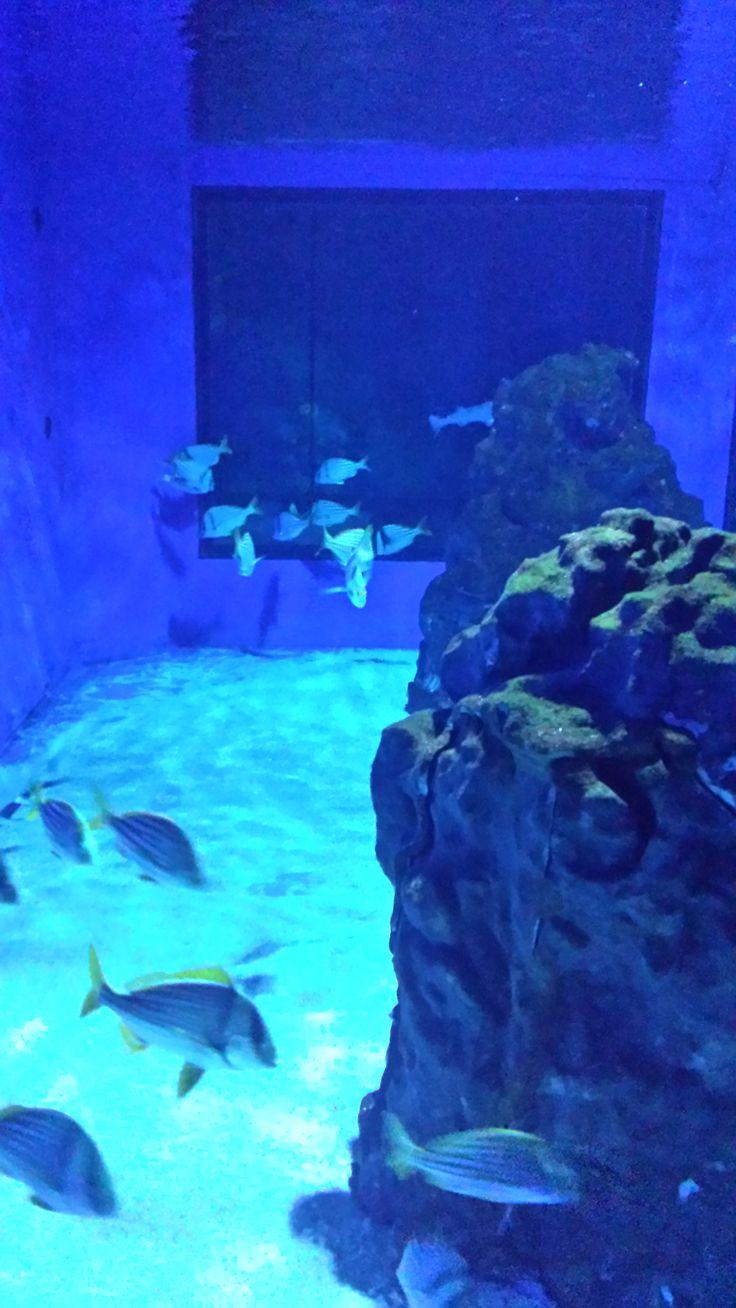 Aquarium Cattolica