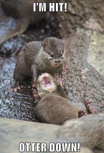 Otter down!