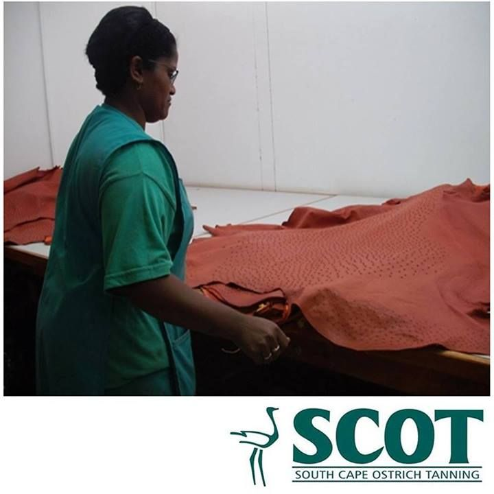 Grading Process at South Cape Ostrich Tanning (SCOT) Why Grade? A grading standard for finished and crust ostrich leather will reflect its cutting value, which in turn will determine the monetary value of each individual skin. Due to an array of unique requirements of our customers, a certain quality grade may be required to enable them to manufacture a specific product. #ostrichleather #skingrading
