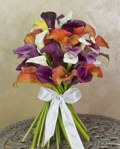 Buchet elegant cu cale divers colorate.  Elegant bouquet with colorful calla lilies.