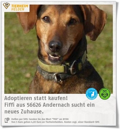 """Fiffi ist leider """"Langzeitinsasse"""" im Tierheim Andenach.  https://www.tierheimhelden.de/hund/tierheim-andernach/bracken_mix/fiffi/9813-0/  Fiffi hat man alles durchgehen lassen und sobald ein Fremder nach ihr greift, schnappt sie. Gegenüber ihrer Bezugsperson ist Fiffi verschmust, ist aber auch selbstbewusst. Hundefreunde sucht Fiffi sich nach Sympathie aus."""