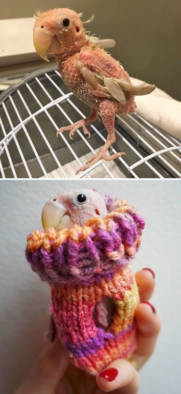 Funny Animals In Tiny Sweatshirt – 25 Pics