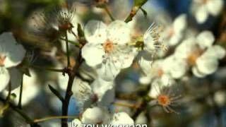 brieven uit de middeleeuwen: aardse minne (2/3) - YouTube