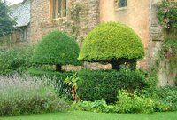 Topiary, formklippning av buskar, träd: juni 2006