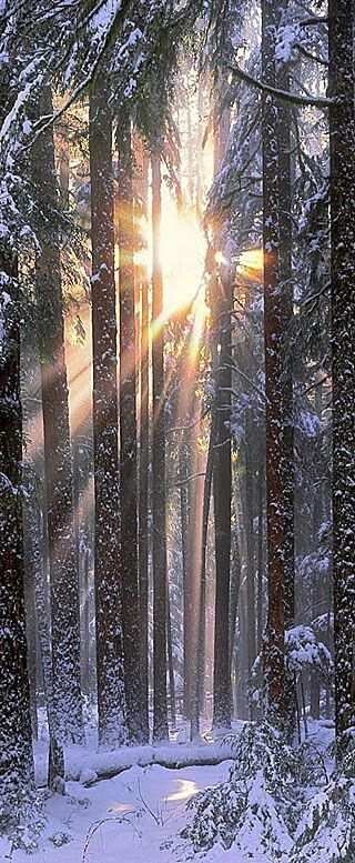 morning sunlight through the trees...