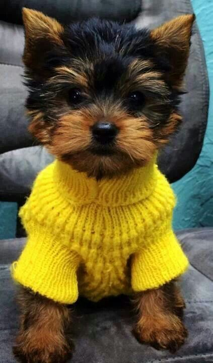 And they call me Mellow Yellow Yorkie. http://easywaytopottytrainyourdog.blogspot.com/2016/05/when-to-start-housebreaking-puppy.html