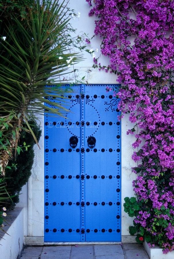 bougainvillea doorway