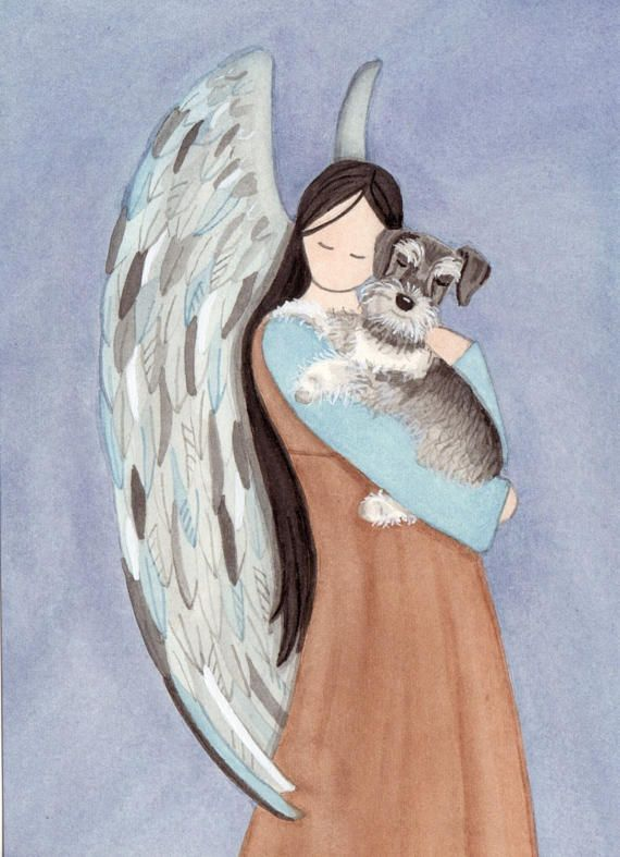 Miniature schnauzer uncropped ears cradled by angel / Lynch