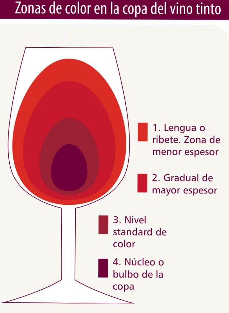 Zonas de color en la copa de #vino tinto