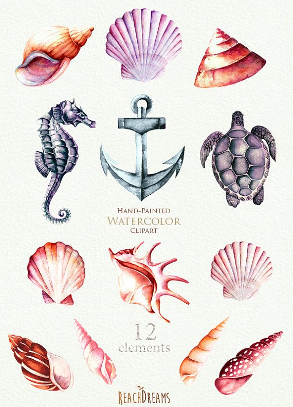 Clipart aquarelle nautique. Coquillages hippocampes par ReachDreams