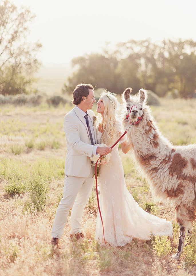 If There Isn't A Llama In My Wedding Photos Then I Don't