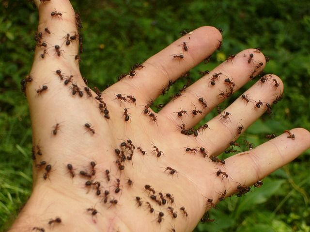 HOW TO ELIMINATE ANTS FROM YOUR HOME NATURALLY