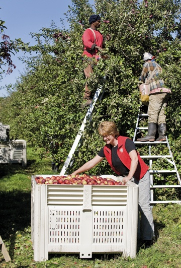 Haskett family owns Cider Keg, using Norfolk County apples. www.norfolkfarms.com  from The Grower Online :: A case history for value-added horticulture