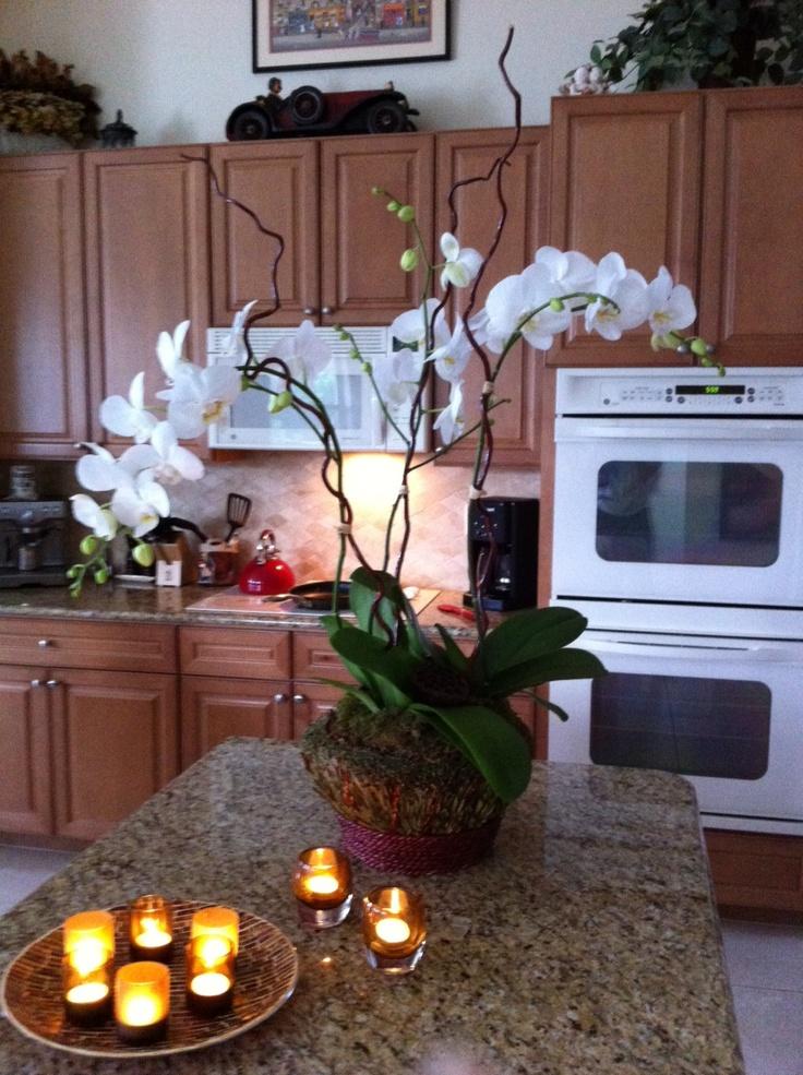 Orchid Arrangement  Home  Jardins, Orchide-5922