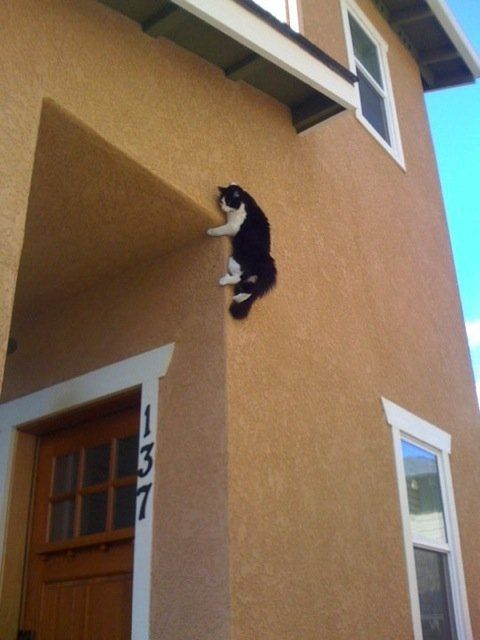 Not sure how this one got up there... #cats #climbing