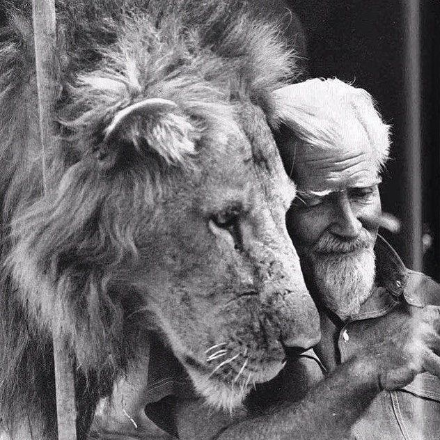 """For Cecil. George Adamson. Baba ya Simba. """"Father of Lions."""" British wildlife conservationist and author."""