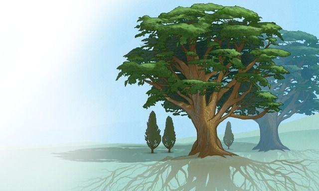 Árvores grandes, com raízes fortes, dão sombra a árvores menores