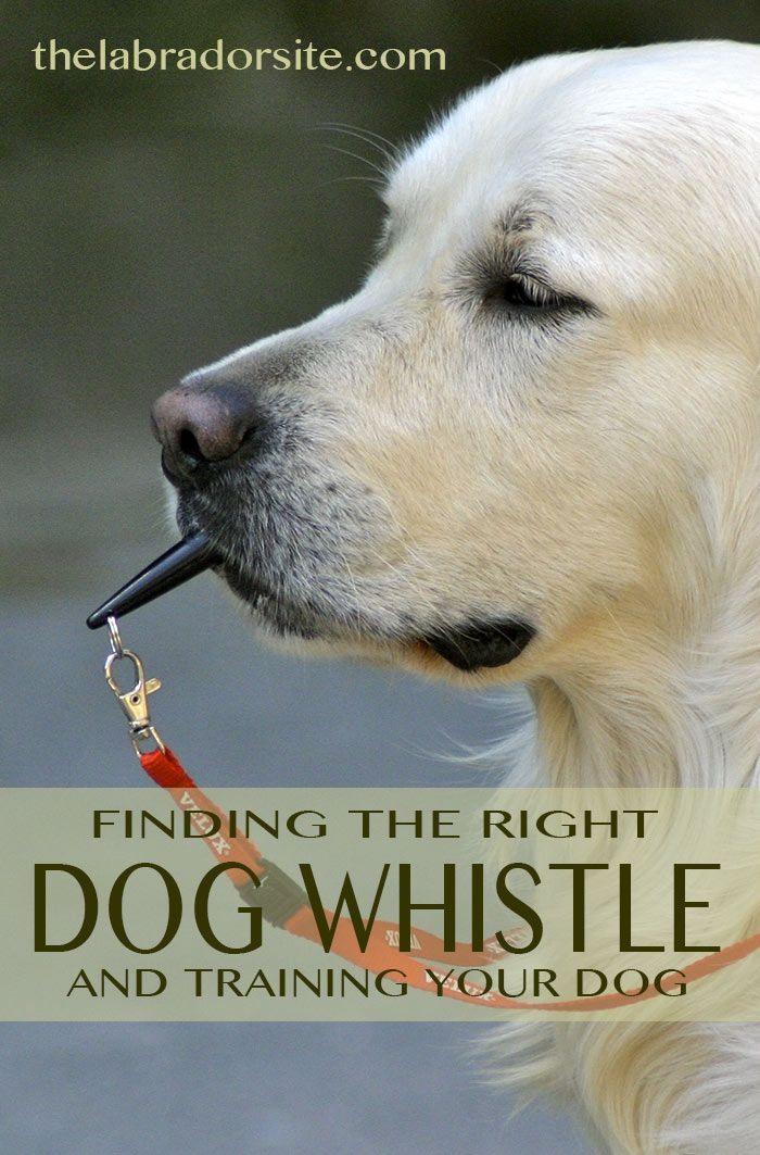 Great information on choosing a dog whistle and training your dog to respond to it