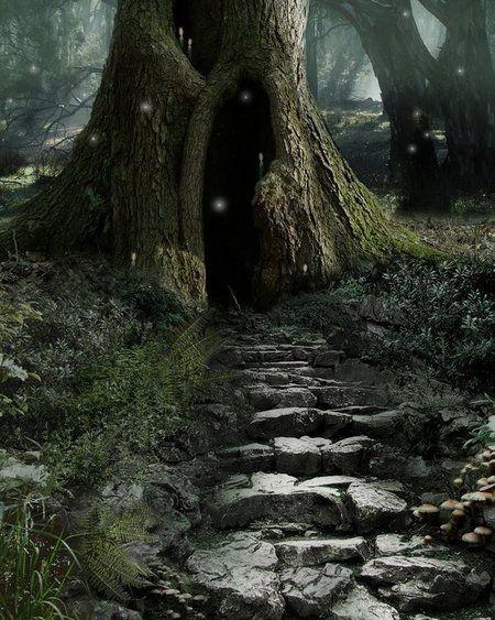 Mystical woods..