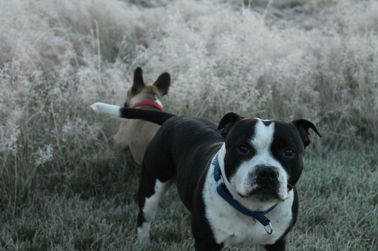 Winter and two dogs