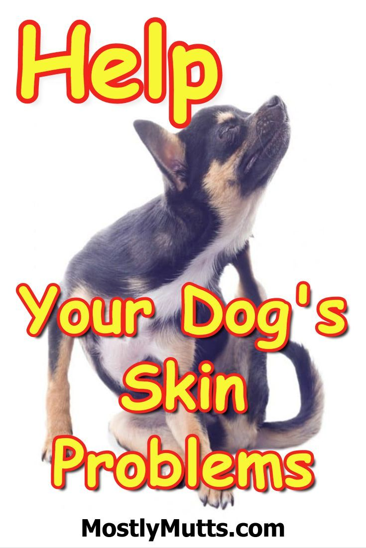 Common Dog Skin Problems And How To Help Them Things For My Dogs