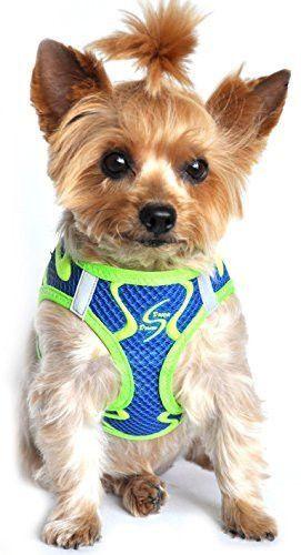 American River Neon Sport Dog Harnesses - Colbalt Blue (XXL)
